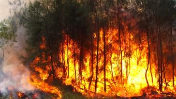 La Cruz Roja Colombiana Seccional Cundinamarca y Bogotá se mantiene en alistamiento preventivo las 24 horas del día para brindar respuesta frente a los incendios forestales y otras emergencias que […]