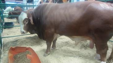El sector ganadero del país le apuesta cada vez más al mejoramiento genético animal para aumentar la producción láctea, tener carne de alta calidad, incrementar la longevidad y prevenir enfermedades […]