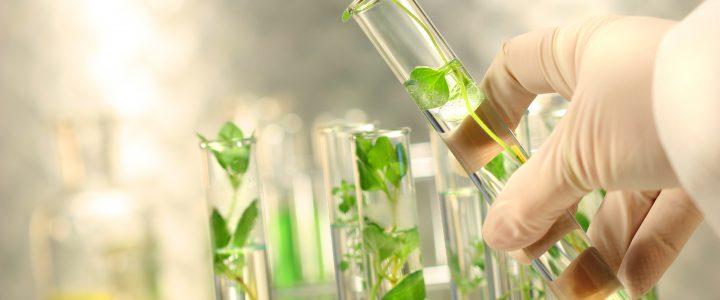 «La biotecnología tiene un alcance macro en Colombia, el segundo país con más biodiversidad y que puede llevar las investigaciones en plantas, hongos y microorganismos a una escala de negocio […]