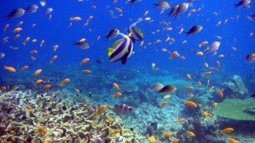 El objetivo es hacer un llamamiento para conservar y usar de forma sostenible los océanos, los mares y los recursos marinos. Juan Francisco Paz Montufar Mayor I. M. (RA) Abogado […]