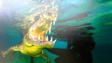 La naturaleza de las especies en su medio con la armonía.        Texto, fotos Lázaro David Najarro Pujol Corresponsal de Primicia en Cuba Unas […]
