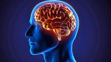 Dos investigaciones en universidades de Europa y Estados Unidos llegaron a una conclusión similar: el gen que nos separa de otros primates apareció en nuestro cerebro hace unos 3 o […]