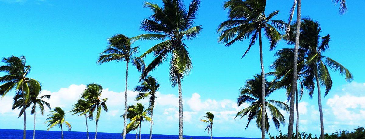 Cayo Bariay, al noroeste de la oriental ciudad de Holguín, es considerado por arqueólogos e historiadores como el primer punto de arribo a Cuba del Almirante Cristóbal Colón, el domingo […]