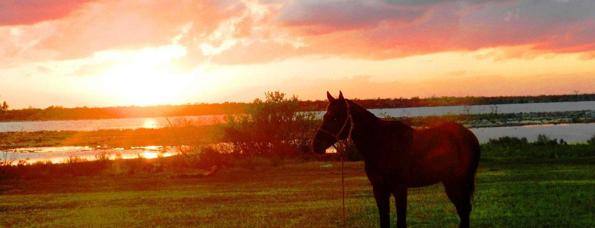 En el norteño balneario de Santa Lucía, ubicado en la provincia de Camagüey y a unos 700 kilómetros al este de La Habana, las puestas de sol están entre las […]