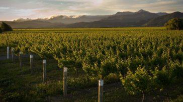 Catalogada por expertos vinícolas como una de las mejores bodegas de Nueva Zelanda, Framingham fue nombrada por The Real Review, la alianza de críticos independientes del […]