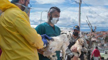 Desde el 20 de marzo hasta la fecha, este equipo conformado por siete médicos veterinarios ha llevado a cabo 137 brigadas médicas.    Desde enero a junio, en […]