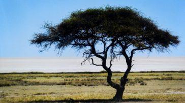 Acacia. Fotografía digital.    Lázaro David Najarro Pujol Fotos y fotocopia del autor El exuberante paisaje y la fauna en diferentes reservas naturales y su entorno en Namibia, […]
