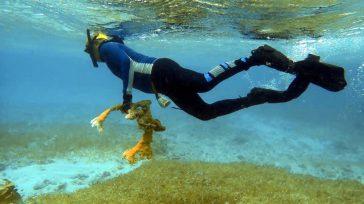 Confidencias: ALTA TENSIÓNSAN ANDRÉS INSPECCIONADO Se han realizado evaluaciones ecológicas rápidas en 15 puntos en San Andrés. En la inspección se pudo observar que el costado occidental de la isla […]
