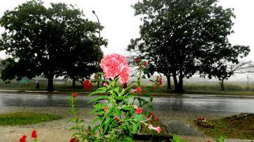 Las flores empiezan a salir en la primavera.    Texto y fotos Lázaro David Najarro Pujol Desde el domingo 21 de marzo, comenzó la primavera en Cuba como […]