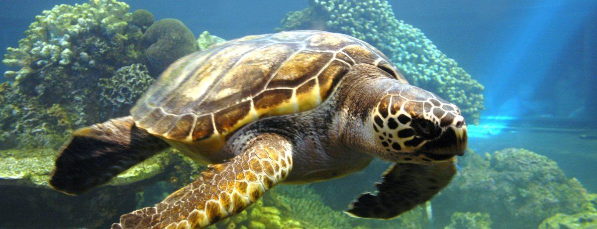El 16 de junio se celebra elDía Mundial de las Tortugas Marinas, uno de los animales más amenazados del planeta y a su vez uno de los más longevos. Llevan […]