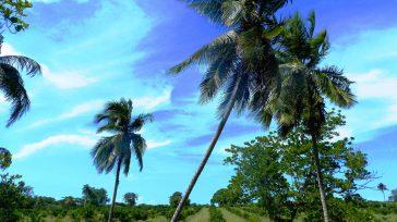 Es un paisaje extraordinariamente bello y ondulado  Texto y fotos Lázaro David Najarro Pujol Corresponsal Primicia Diario Cuba  Las raíces de la última etapa de la liberación de […]