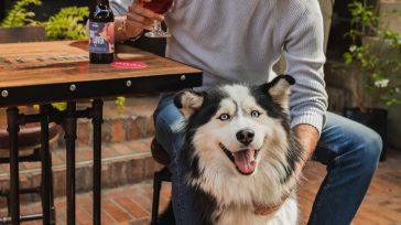 Con el slogan: «Brindemos Con Ellos», este par de emprendedores quieren aportar por medio de una manera original a la problemática de perritos en condiciones de abandono, mala alimentación o […]