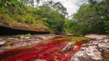 Caño Cristales, paraiso natural de colores en el Llano.   NUEVO PICO DE LA PANDEMIA El ministro de Salud, Fernando Ruiz, anunció que el paíspodría volver a tener un […]