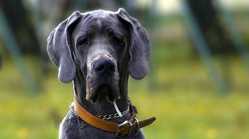 El perro, el mejor amigo del hombre    Pedro Fuquen La importancia de las mascotas en Colombia continúa creciendo a un ritmo acelerado, se estima que seis de […]
